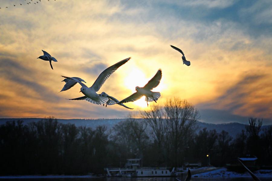 Birds... by Csipesz
