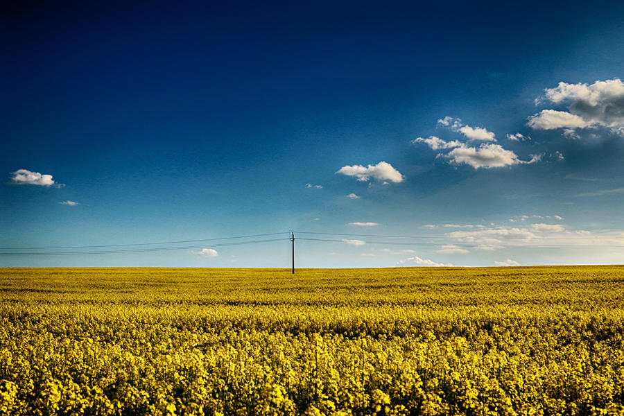 Yellow and blue by Csipesz