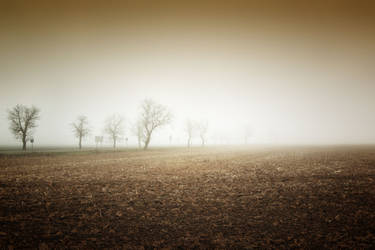 Foggy field by Csipesz