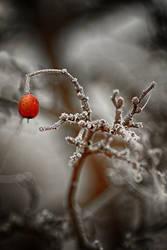 Frozen 14 by Csipesz