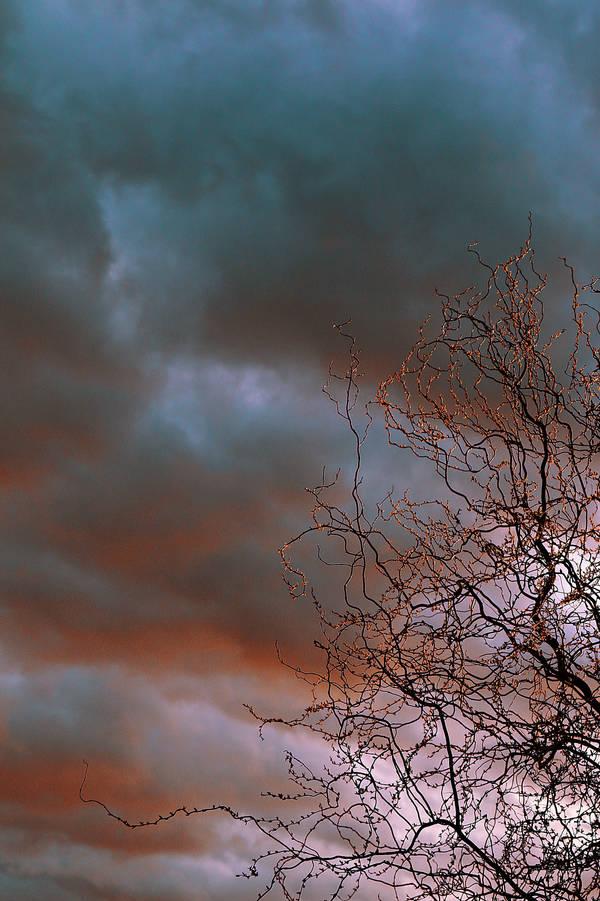 Twigs by Csipesz