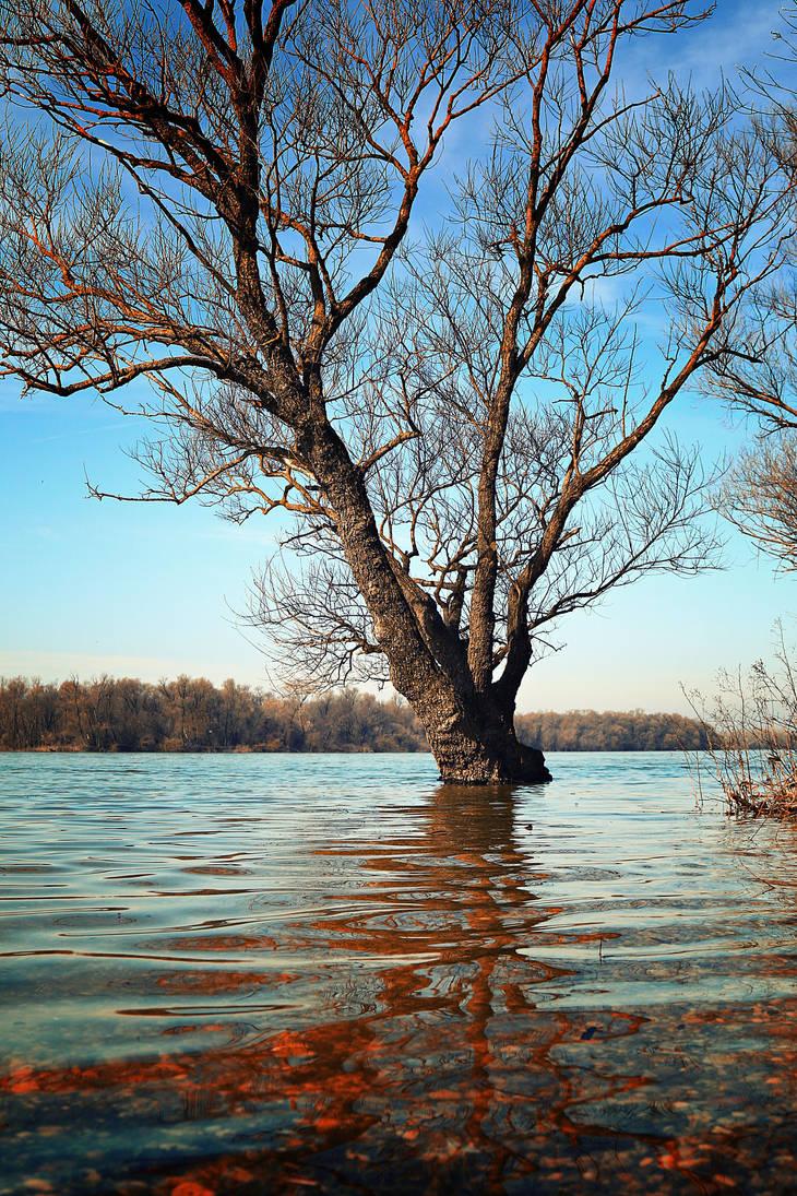 Tree... by Csipesz