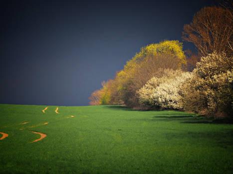 Spring field 2