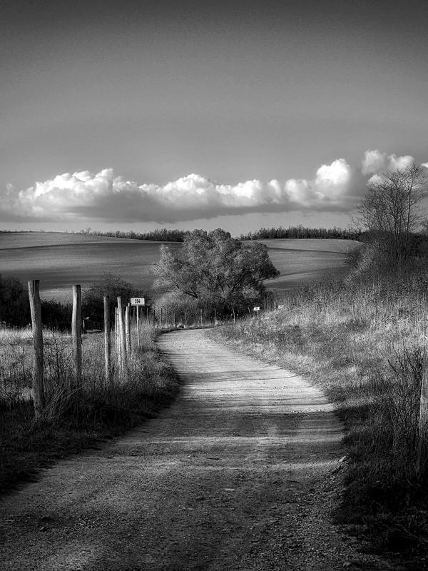 Spring walk... by Csipesz