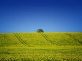 Spring field 3