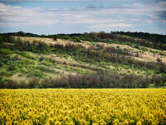 Spring field 4