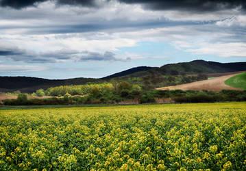 Spring field 5