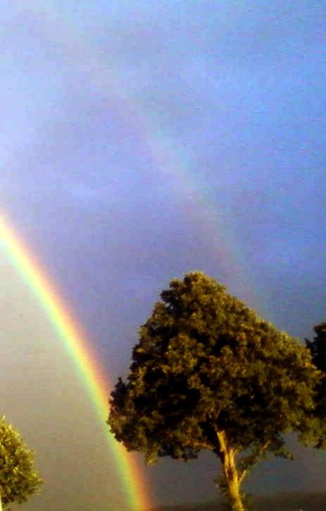 Rainbows over Tree by MetalFaie
