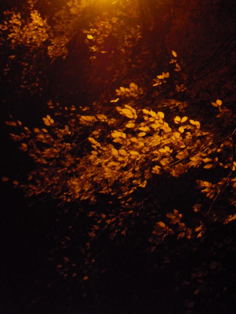 Illuminated Tree by MetalFaie