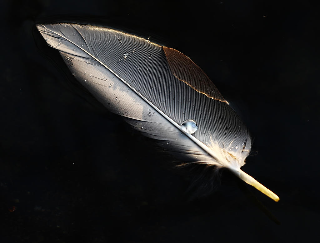 Waterdrop on floating feather by MetalFaie