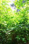 Green by DisasterAng