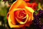 Orange-ish by DisasterAng