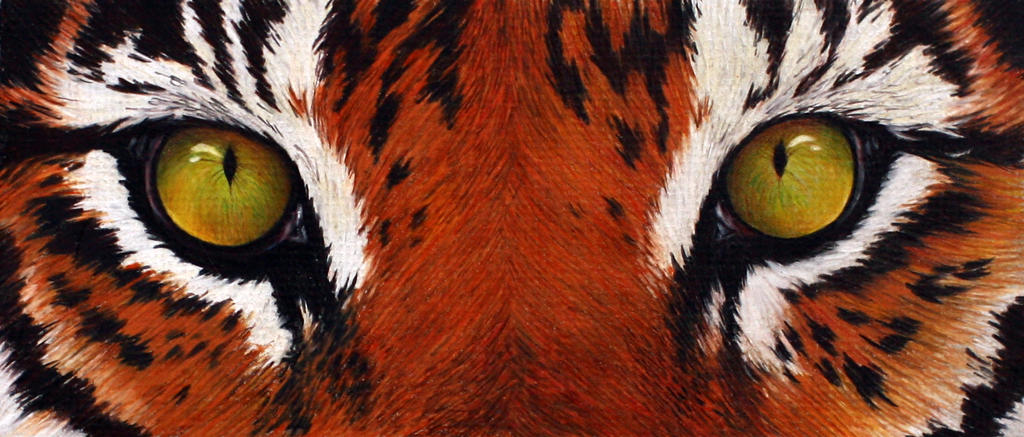 Haven of beasts Tiger_eyes_by_kittyked-d4yx1jj