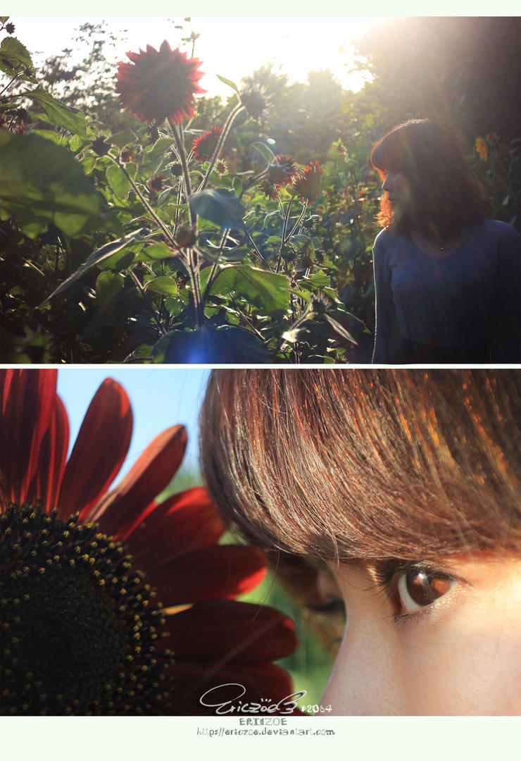 Sunflower003 by ericzoe