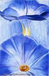 Blue exotic flower