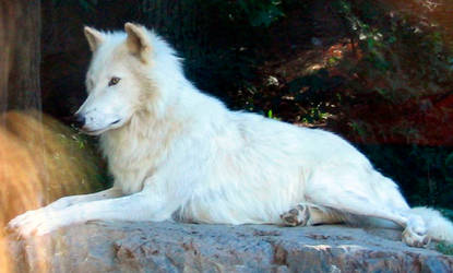 Wolf 1 by HFmini