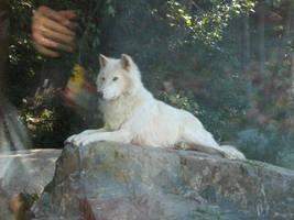 Wolf 3 by HFmini