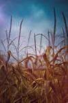 corn_03