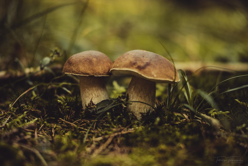 Mushrooms by tobiasth