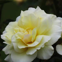 Lemon lovely by Heylormammy