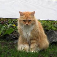 Sad kitty by Heylormammy