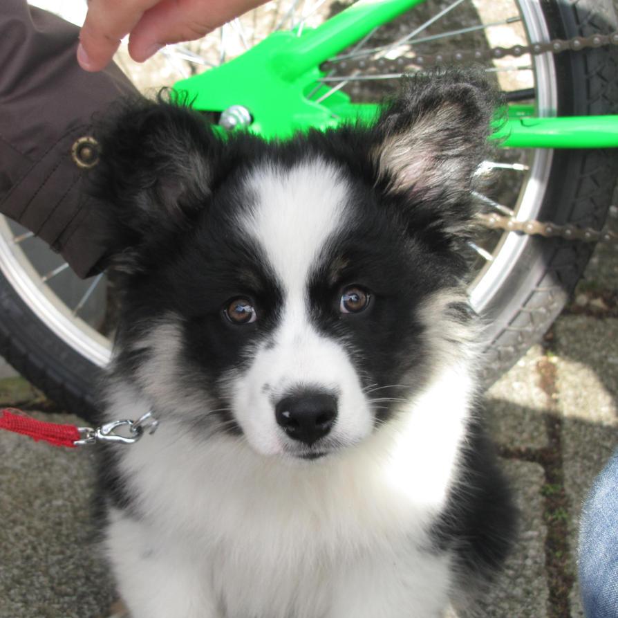 Julie's puppy by Heylormammy
