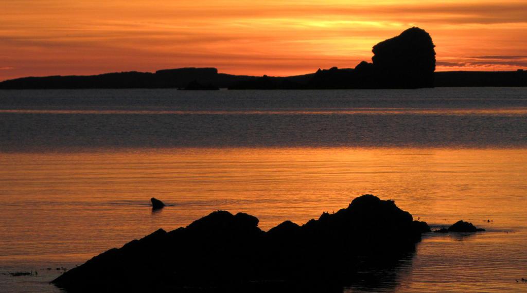 Seal Sunset by Heylormammy