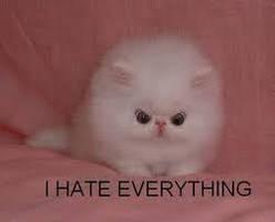 Hateful kitty by Unicorns-Are-Beast