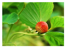 Srawberry by hazydream