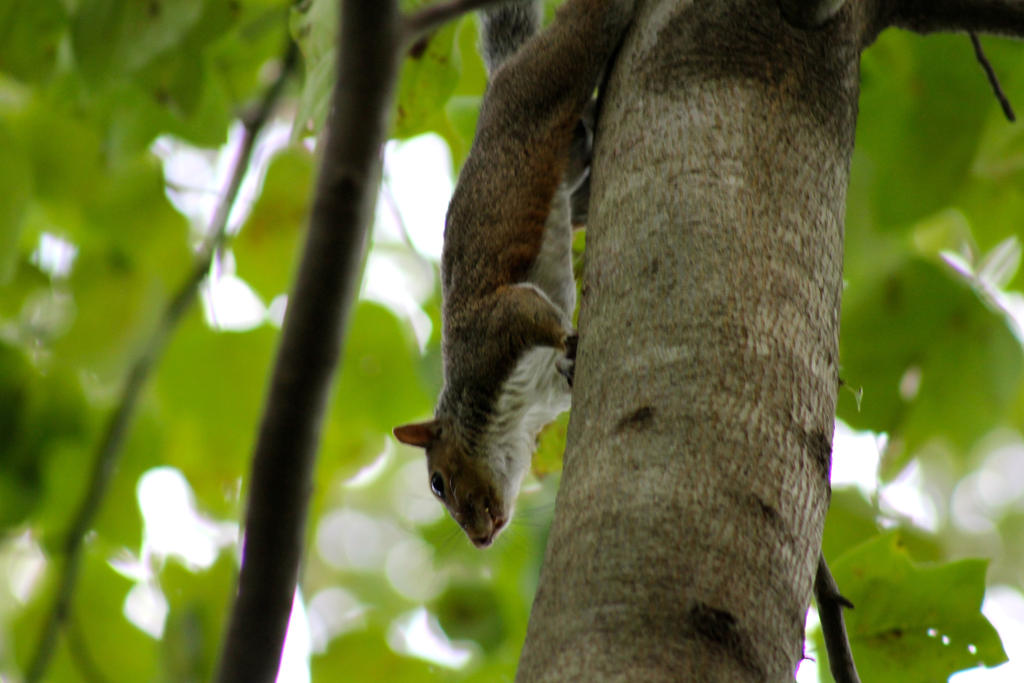A Surveying Squirrel by Winter-Flight