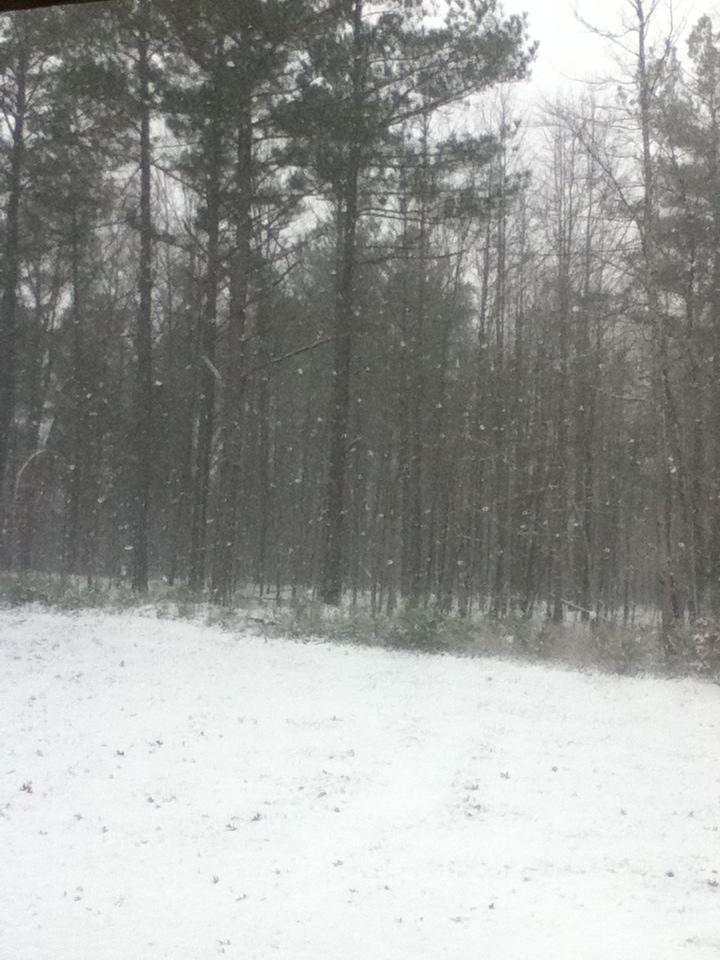 Forest Snow by Kiba-Aido