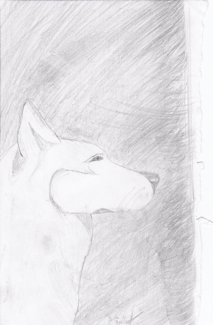 Husky Sketch by Kiba-Aido