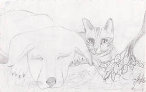 Cat and Dog by Kiba-Aido