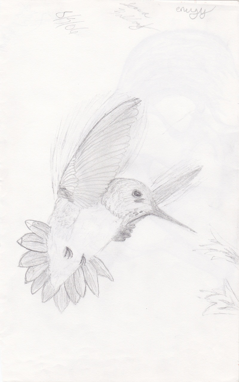 Hummingbird by Kiba-Aido