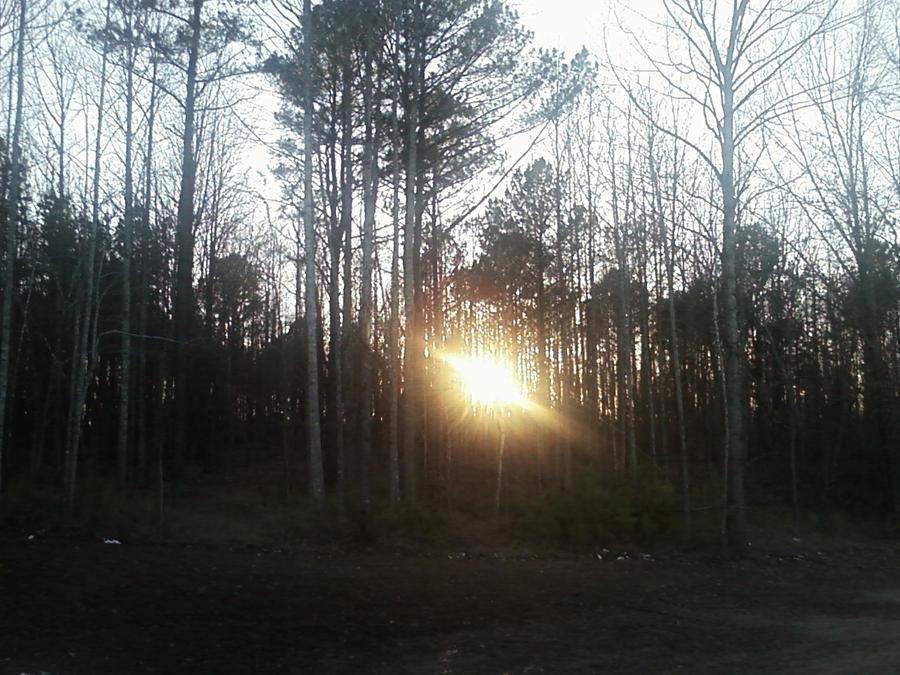 Sun thru Trees by Kiba-Aido