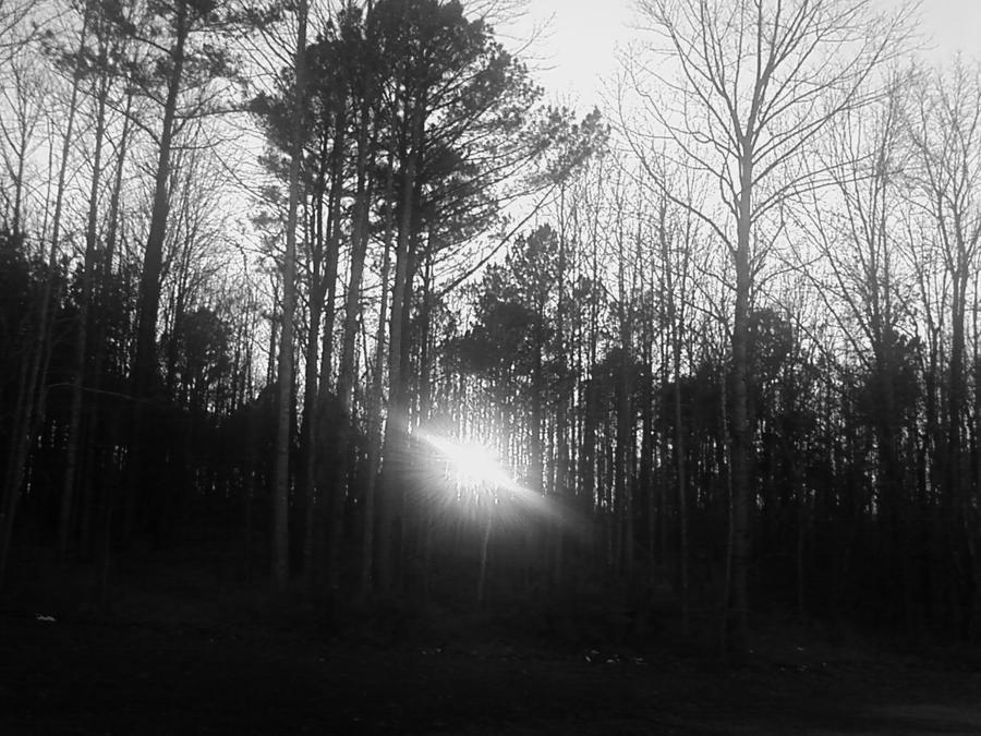 Sun And Trees by Kiba-Aido