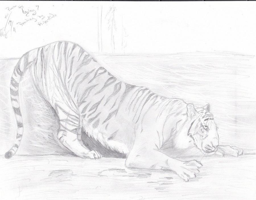 Tiger-Stretch sketch 4 hayley by Kiba-Aido
