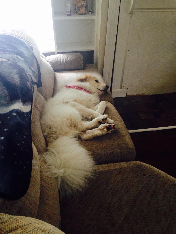 Dog tired by Kiba-Aido