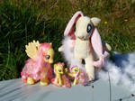 Fluttershy collection