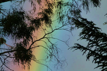 Rainbow and leaves
