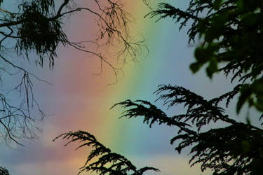 Rainbow and more leaves