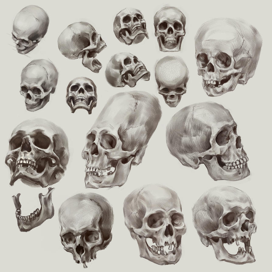 Skull Study     by AlexanderExorcist