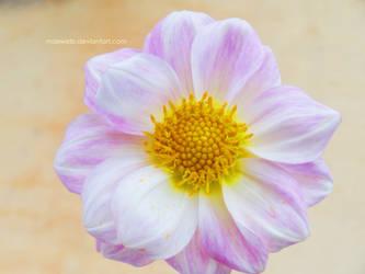 Flower 4 by Maxwelb