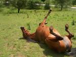 1...2...3...stretch by Emotionless-animal