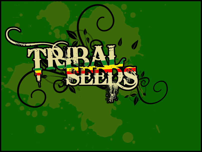 Tribal Seeds Logo Tribal Seeds is a Reggae Band
