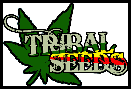 Tribal Seeds-Weed by oneTHIRTYsix on DeviantArt