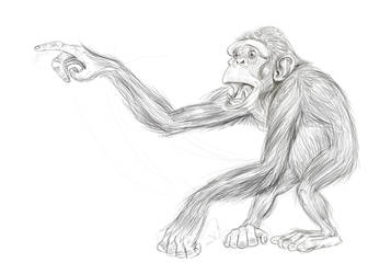 Chimp_sketch by farneze