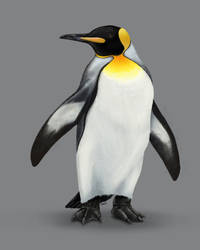 King Penguin by farneze