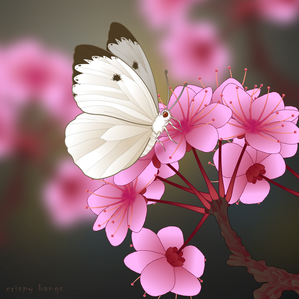 White butterfly on a pink flower by cocteautwins on deviantart white butterfly on a pink flower by cocteautwins mightylinksfo Choice Image