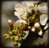 bees and blossoms pt.2 by MarcoHeisler